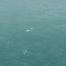 Wind wave conditions at the ISMAR oceanographic tower, no rain. U10 10 m/s, Hs 1.4 m. Note the frequent white-caps typical of an active generation.