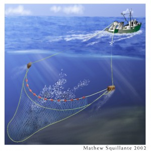 METHODS FOR INVESTIGATING THE MORTALITY OF FISH  ESCAPING FROM TOWED FISHING
